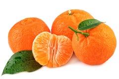 Frutas orgánicas de las mandarinas con las hojas aisladas en blanco Imagenes de archivo