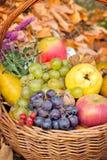 Frutas orgánicas del otoño Fotografía de archivo