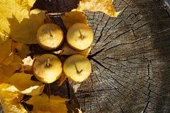 Frutas orgánicas frescas Peras naturales con las hojas Imagen de archivo libre de regalías