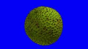 Frutas-pão de giro no fundo azul 02 ilustração stock