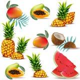 Frutas papaya, piña, coco fresco, sandía, vector determinado del trópico del verano de la colección del mango Foto de archivo libre de regalías