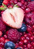 Frutas pequenas Imagens de Stock
