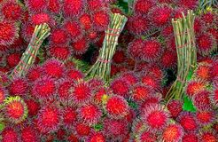 Frutas recién cosechadas del Rambutan en Tailandia imágenes de archivo libres de regalías