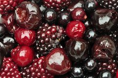 Frutas recientemente forrajeadas del bosque imágenes de archivo libres de regalías
