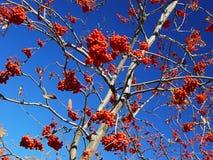 Frutas rojas Imagenes de archivo