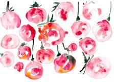 Frutas rojas abstractas aisladas en el fondo blanco Foto de archivo libre de regalías