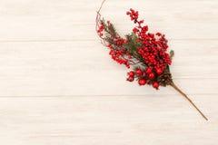 Frutas rojas en la Navidad de la rama para la decoración Imágenes de archivo libres de regalías