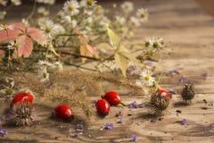 Frutas rojas maduras de la perro-rosa con el rosa y las hojas verdes, margaritas blancas, violetas púrpuras imágenes de archivo libres de regalías