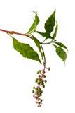 Frutas salvajes Fotos de archivo