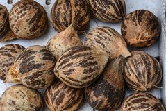 Frutas secadas del coco en venta en el mercado rural imagen de archivo libre de regalías