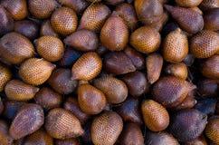 Frutas tropicais Imagens de Stock Royalty Free