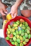 Frutas tropicais do cacto Foto de Stock Royalty Free