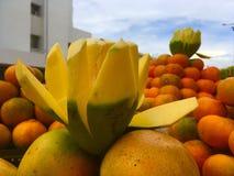 Frutas tropicales obraz royalty free