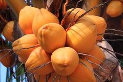 Frutas tropicales Imágenes de archivo libres de regalías