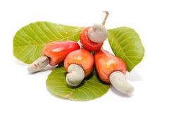 Frutas tropicales del anacardo Foto de archivo