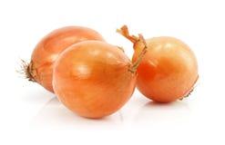 Frutas vegetales de la cebolla aisladas en blanco Imágenes de archivo libres de regalías