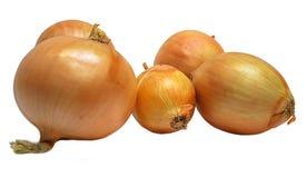 Frutas vegetales de la cebolla aisladas en blanco Foto de archivo