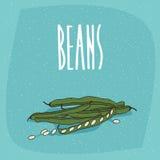 Frutas vegetales maduras aisladas de la vaina del guisante o de habas libre illustration