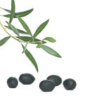 Frutas verde-oliva imagens de stock