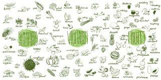 Frutas, verduras y colección de los superfoods Imagen de archivo
