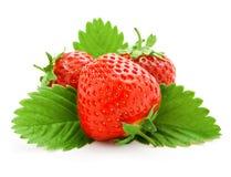 Frutas vermelhas da morango com folhas verdes Fotos de Stock Royalty Free