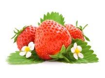 Frutas vermelhas da morango com folhas verdes Fotografia de Stock