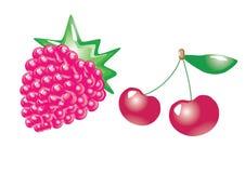 Frutas. vetor Imagem de Stock