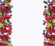 Frutas y bayas rojas y negro-azules en un fondo blanco Bayas en la frontera de la imagen con el espacio de la copia para el texto Foto de archivo libre de regalías