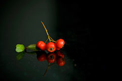 Frutas y gérmenes Foto de archivo