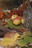 Frutas y hojas del otoño Foto de archivo libre de regalías