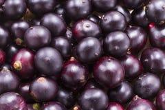 Frutas y polvo del acai Foto de archivo