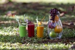 Frutas y zumos de fruta en un jardín tropical foto de archivo libre de regalías