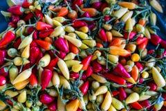 Frutescens multicolores de poivron sur un marché photo libre de droits