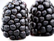 Fruticosus del Rubus della mora Fotografia Stock Libera da Diritti