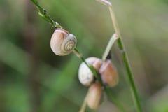 Fruticum de Fruticicola Imágenes de archivo libres de regalías