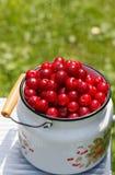 Fruto ácido dos cherrys do cerasus do Prunus Fotos de Stock Royalty Free