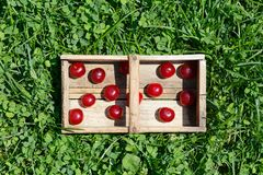 Fruto ácido dos cherrys do cerasus do Prunus Foto de Stock