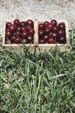 Fruto ácido dos cherrys do cerasus do Prunus Fotografia de Stock Royalty Free