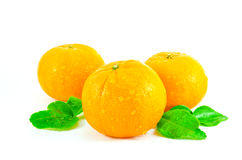 Fruto alaranjado isolado no fundo branco Imagem de Stock