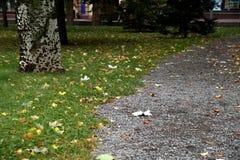 Fruto caído de uma árvore de castanha em um passeio Imagem de Stock