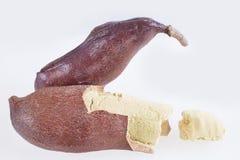 Fruto da alfarroba - courbaril do Hymenaea imagem de stock royalty free