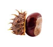 Fruto da castanha de Brown, fim acima Fotografia de Stock Royalty Free