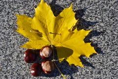 Fruto da castanha e folhas de outono amarelas no parapeito do pavimento foto de stock royalty free