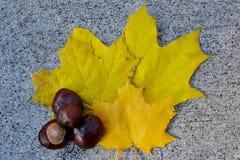 Fruto da castanha e folhas de outono amarelas no parapeito do pavimento imagens de stock royalty free