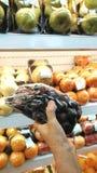 Fruto da colheita fotografia de stock