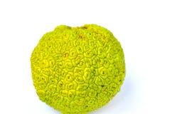 Fruto da laranja de Osage no fundo branco Imagens de Stock Royalty Free