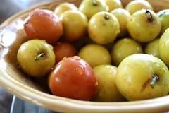 Fruto da maçã do macaco Foto de Stock Royalty Free