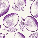 Fruto da manga isolado no fundo branco Imagens de Stock
