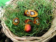 Fruto da palma, Foto de Stock Royalty Free