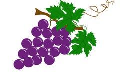 Fruto das uvas - ilustração Fotografia de Stock